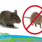 كيفية القضاء على الفئران