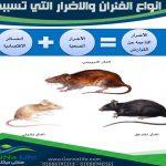 اضرار الفئران وانواعها المختلفة