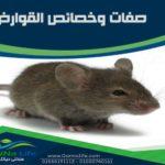صفات وخصائص القوارض و الفئران
