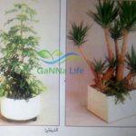 نباتات الزينة الظل بالأصص