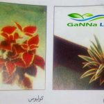 نباتات الظل الورقية غير المزهرة