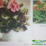 نباتات الزينة المزهرة بالأصص