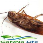 مكافحة الحشرات اسس وقواعد