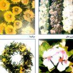 الاصابات الحشرية لنباتات الزينة