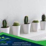 أهم النصائح لرعاية نباتات الزينة