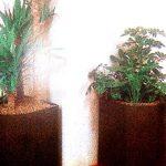 تنسيق نباتات الزينة بالاصص داخل القاعات