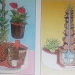 العمليات الزراعية لنباتات الزينة ( الضرورية )