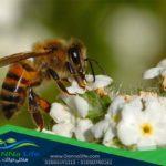 النحل والزنابير