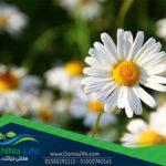 أهم أنواع الزهور التي تزرع في حدائق المنازل